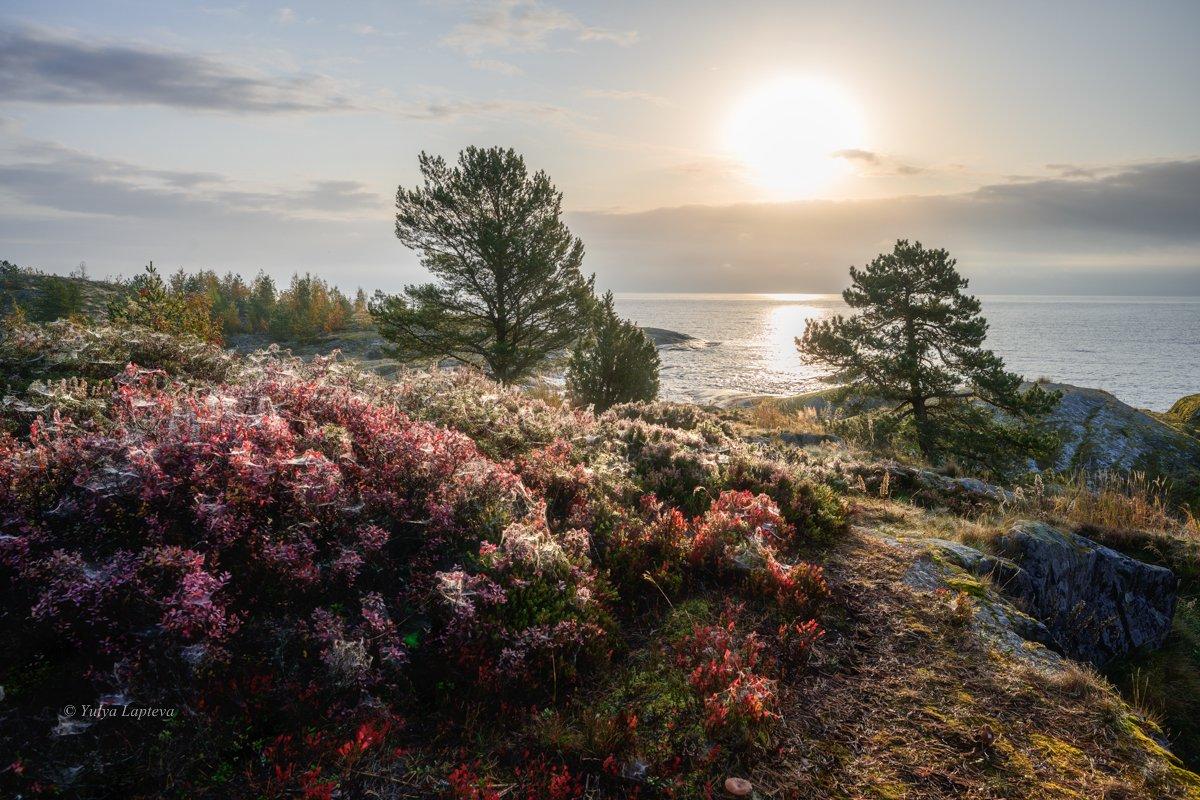 карелия,осень,туман,красота,рассвет,утро,сосны, Юлия Лаптева