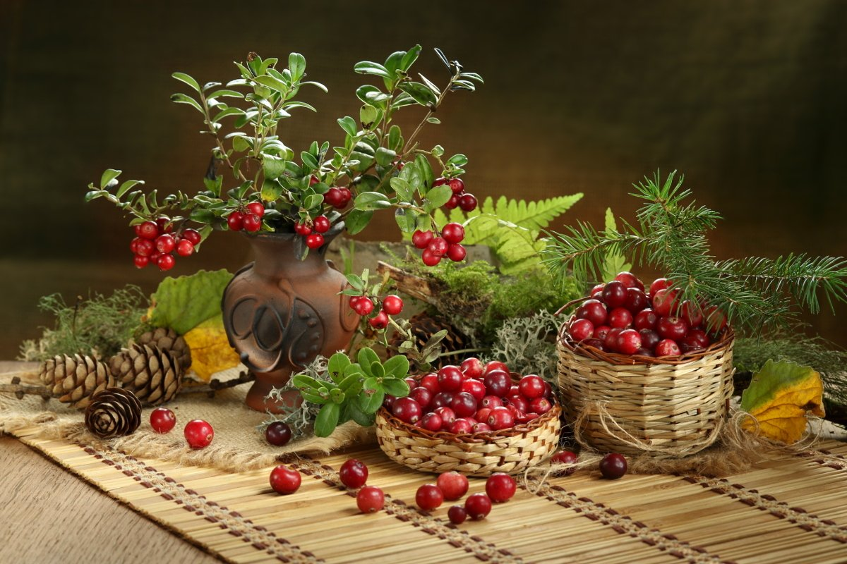 природа, ягоды, брусника, клюква, веточки, Шруб (Беляева) Татьяна