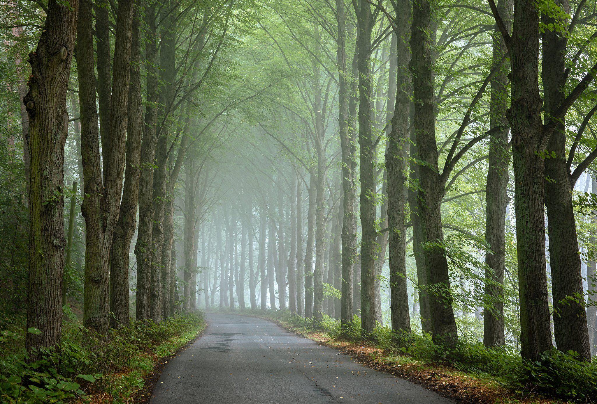 туннель деревьев tunnel road magic path trees mist foggy morning autumn fall дорога dranikowski poland tree park, Radoslaw Dranikowski