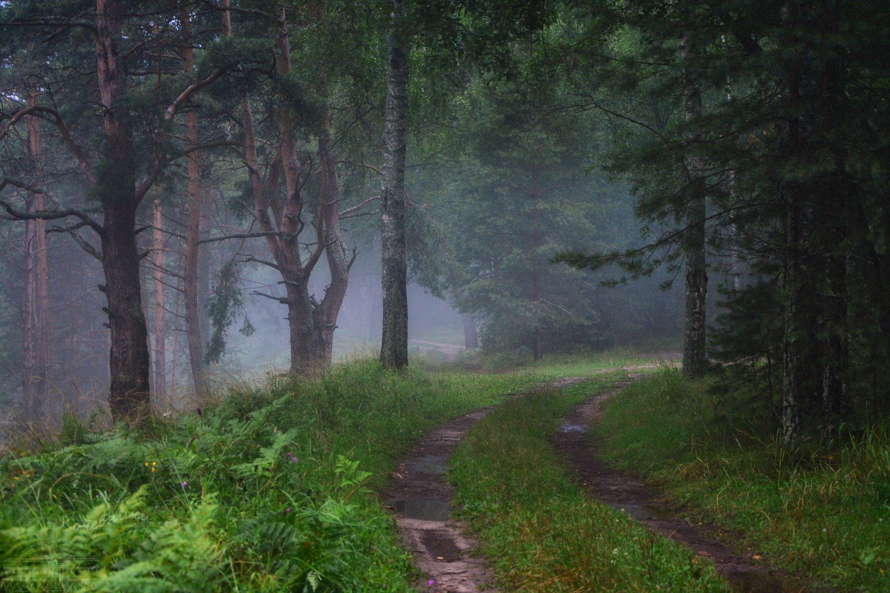 лес, туман, Абрамова Юлия