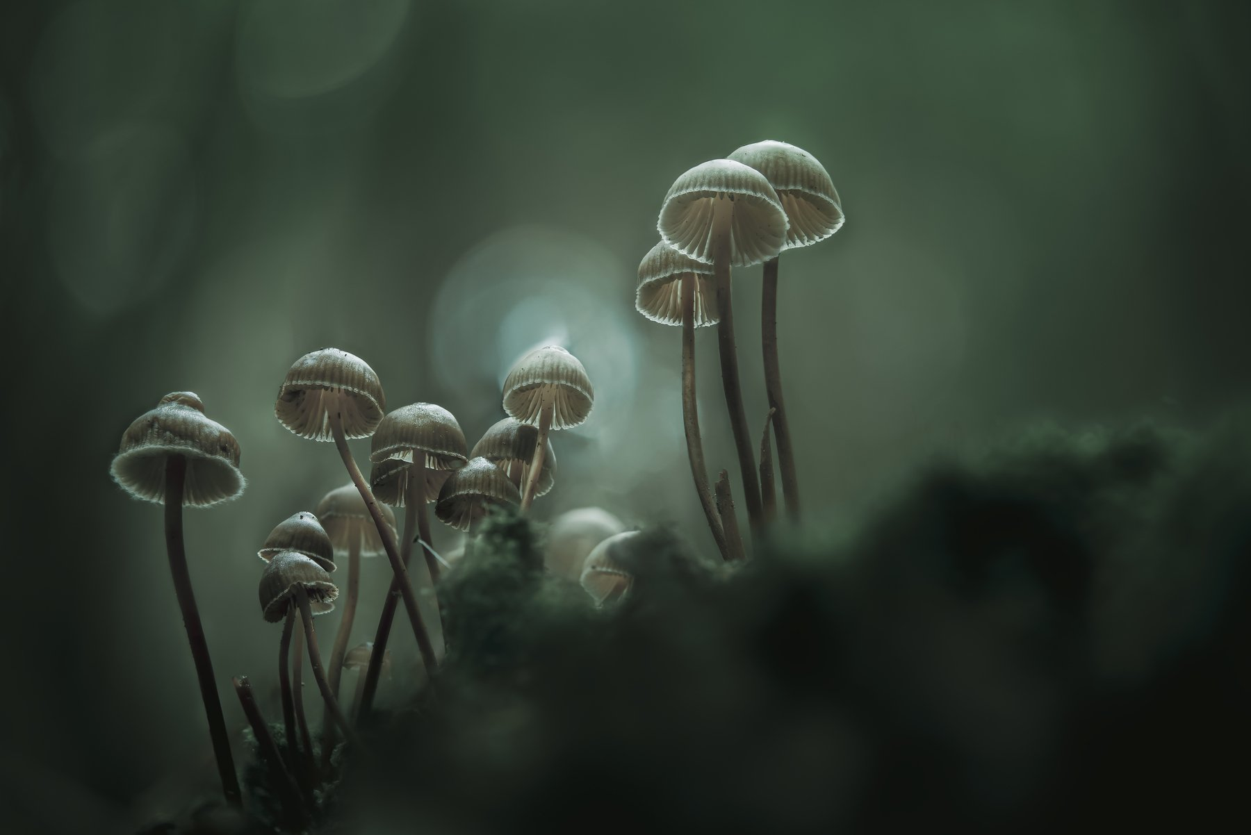 macro, forest , mushroom, autumn, Coelho Antonio