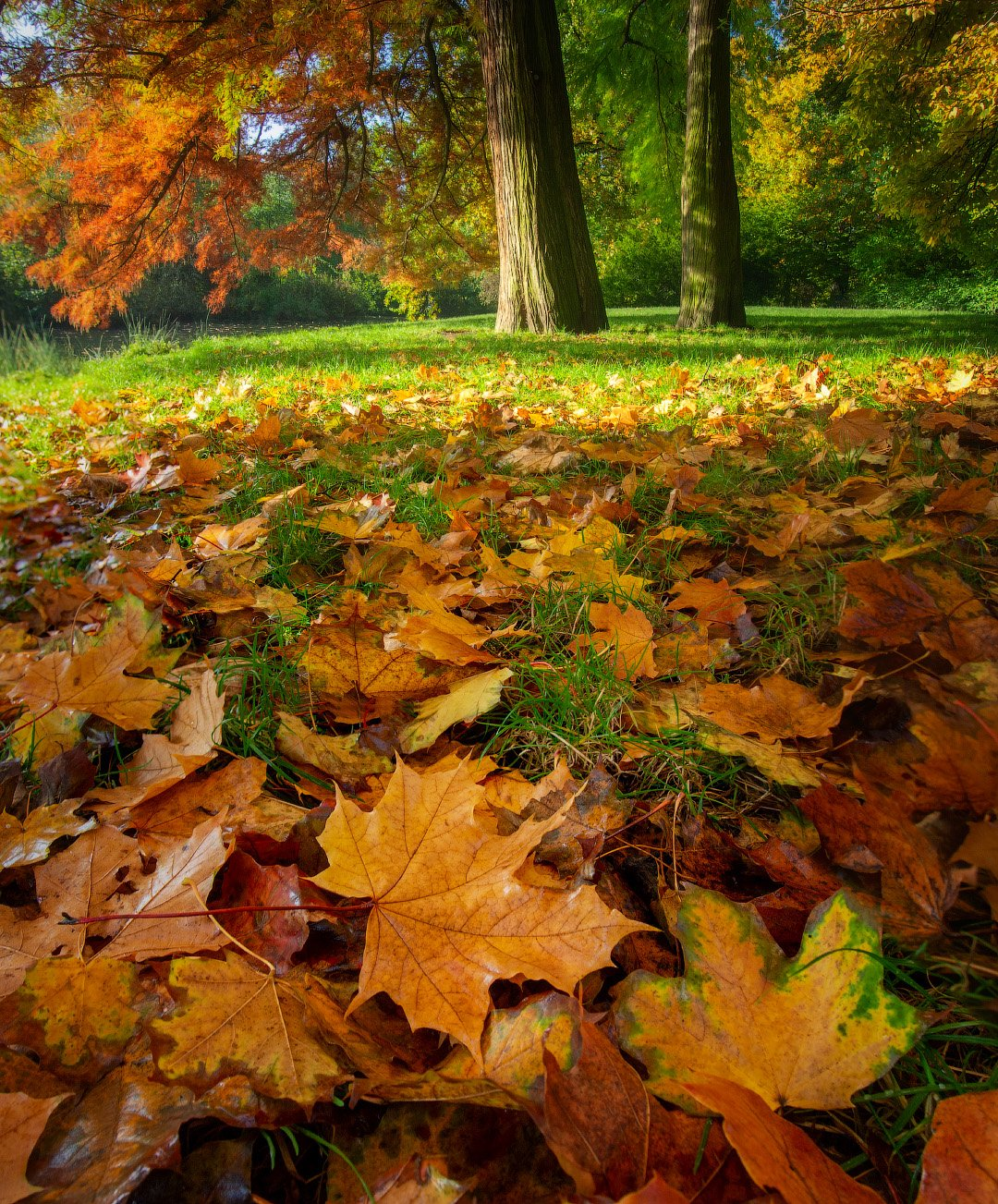 осень, утро, парк, autumn, morning, park, Виктор Тулбанов