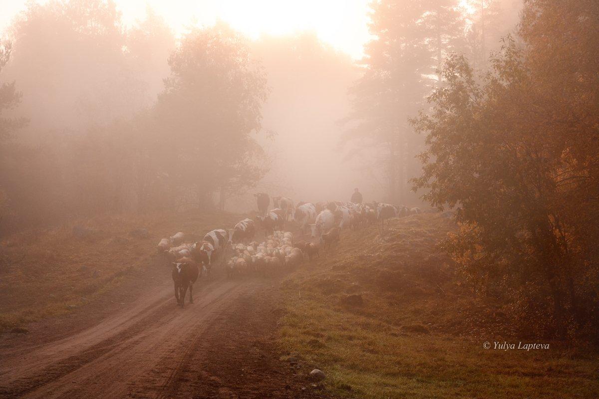 карелия,осень,туман,красота,рассвет,утро, Юлия Лаптева