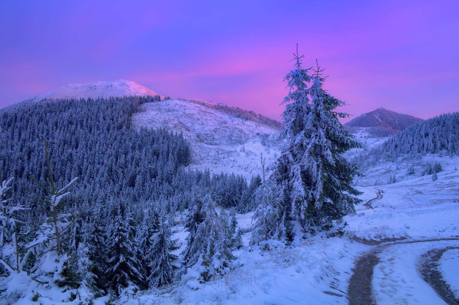 #nature, #туман, #лес, #oсень, #украина, #карпаты, #пейзаж, #закат, #туман, #солнце, #свет, #mountain range, #mountains, #туризм, #лес, #nature, #природа,, Морозов Леонид
