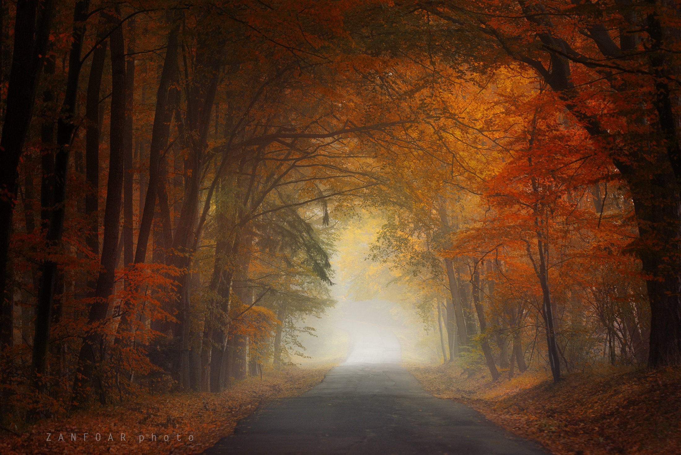 магия осени,магия ,осень, дорога, листья, краски осени, nikon d750, zanfoar, чехия,чешская республика, Zanfoar