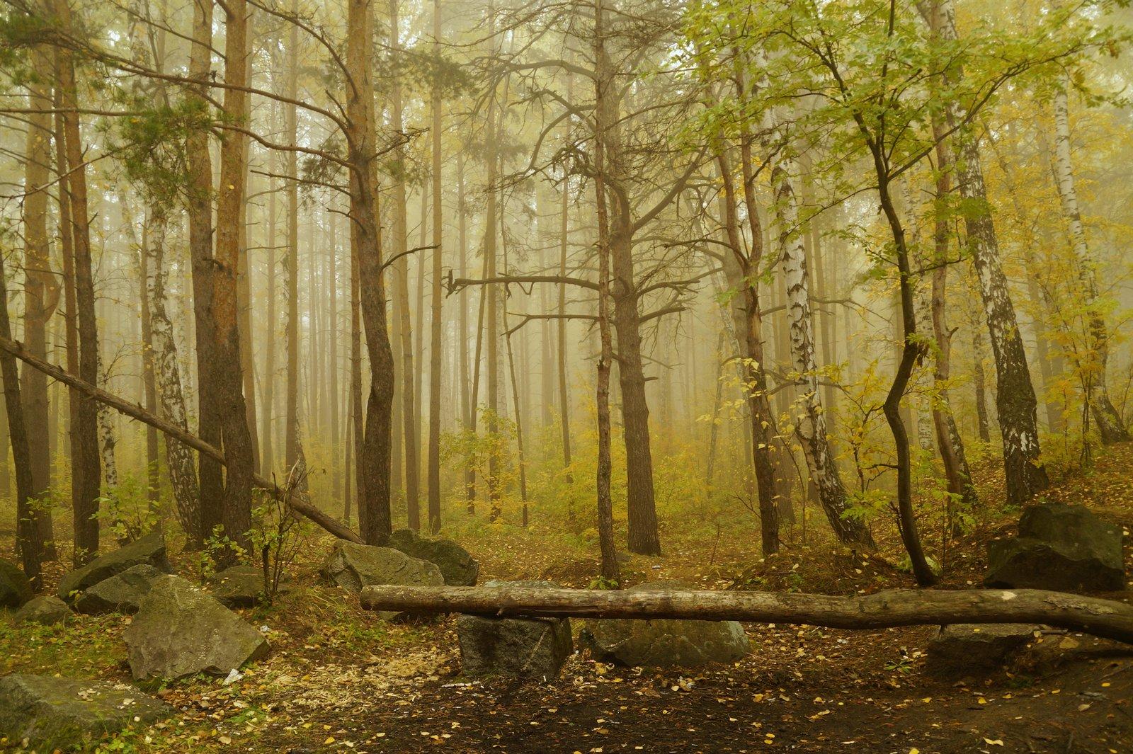 пейзаж,туман,октябрь,лес, Инаида