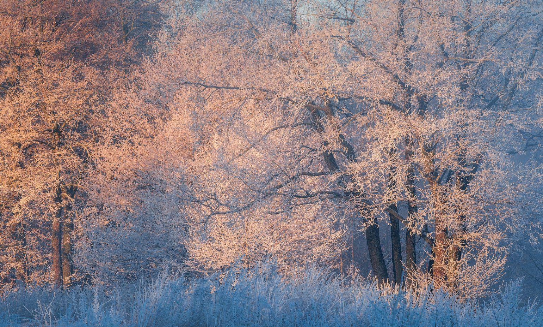 зима, пейзаж, утро, мороз, пехорка, Левыкин Виталий