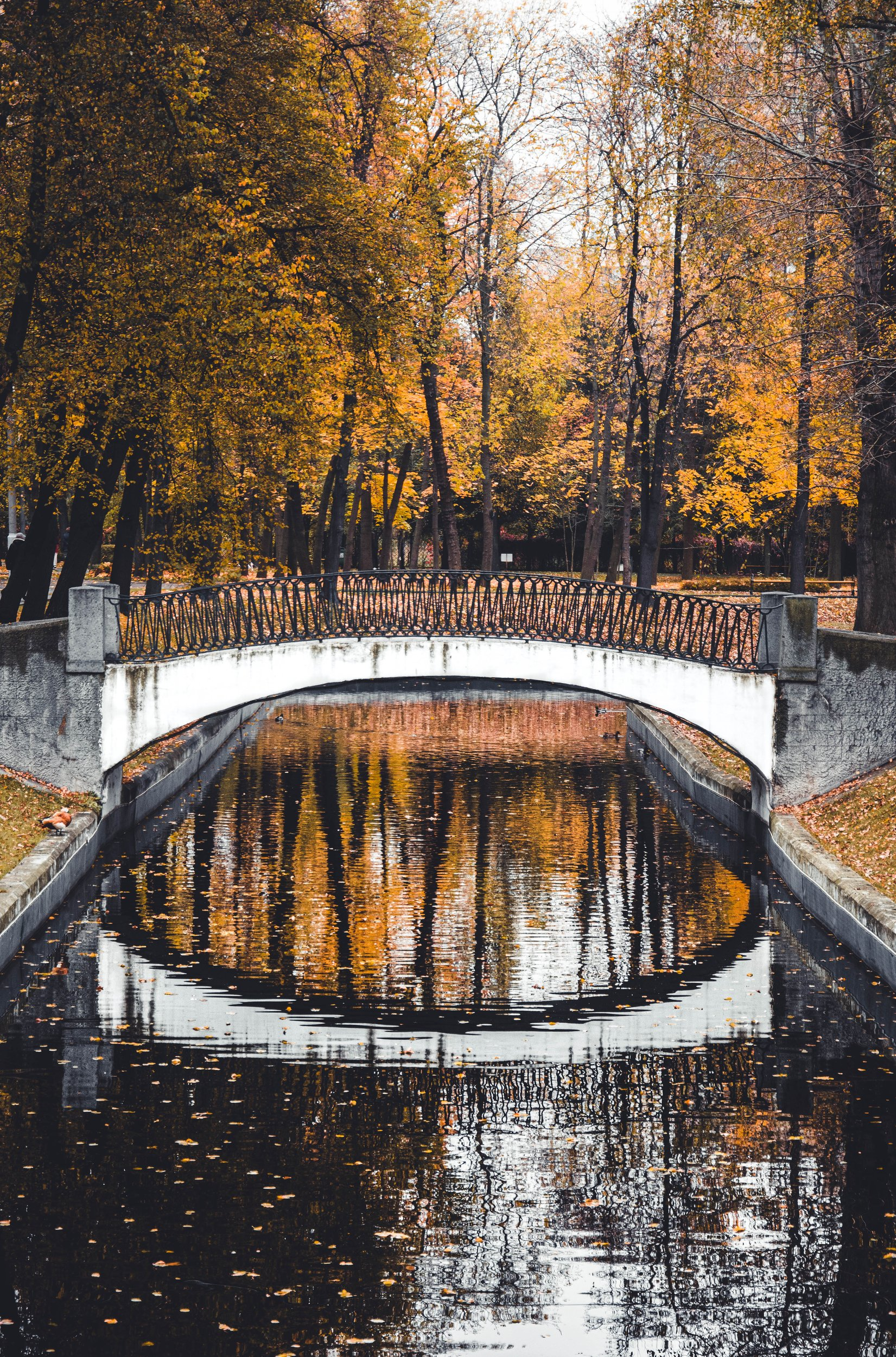 autumn, fall, yellow, refliction, architecture, park, nature, river, water, Moscow, Russia, Гладков Сергей
