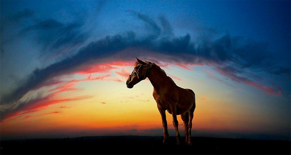 лошадь, небо, дуга, Yuri Mart