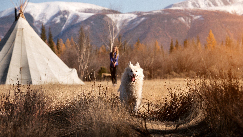 лайка, горы, закат, природа, пейзаж, собака, Попов Станислав