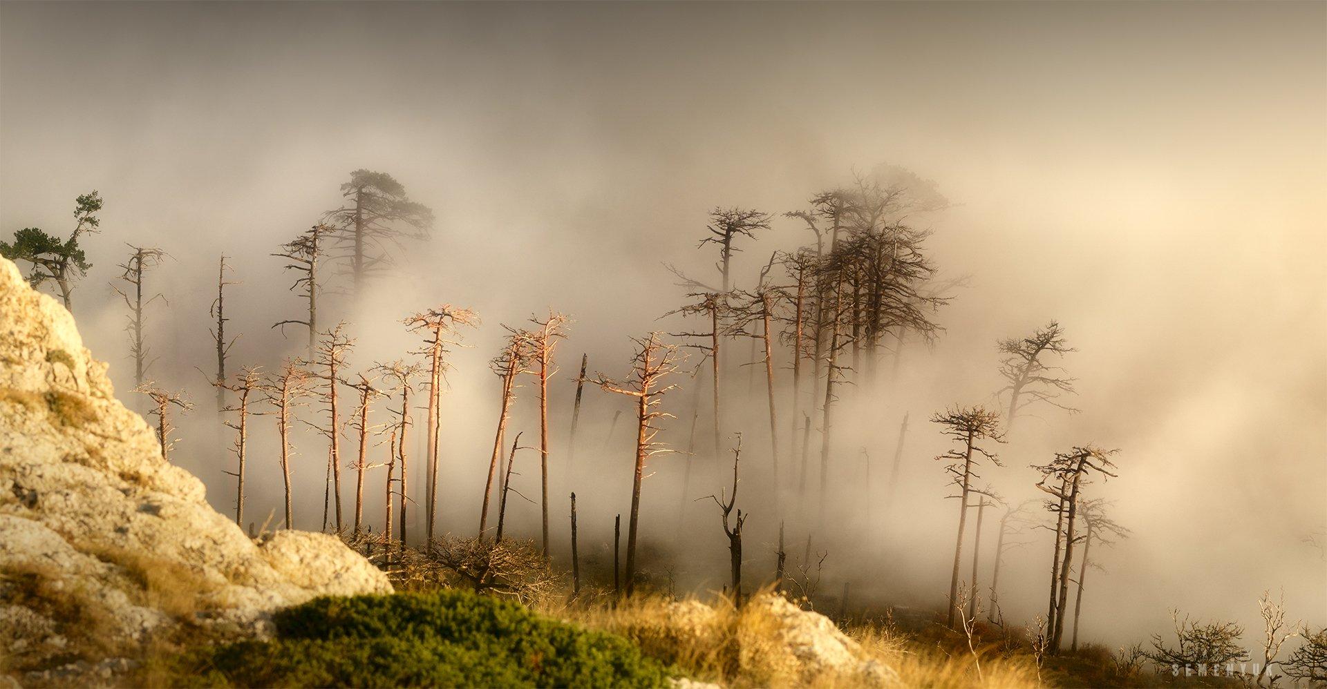 крым, горы, туман, облака, сосны, осень, никитская яйла, природа, пейзаж, mountain, fog, myst, clouds, pine trees, landscape., Семенюк Василий