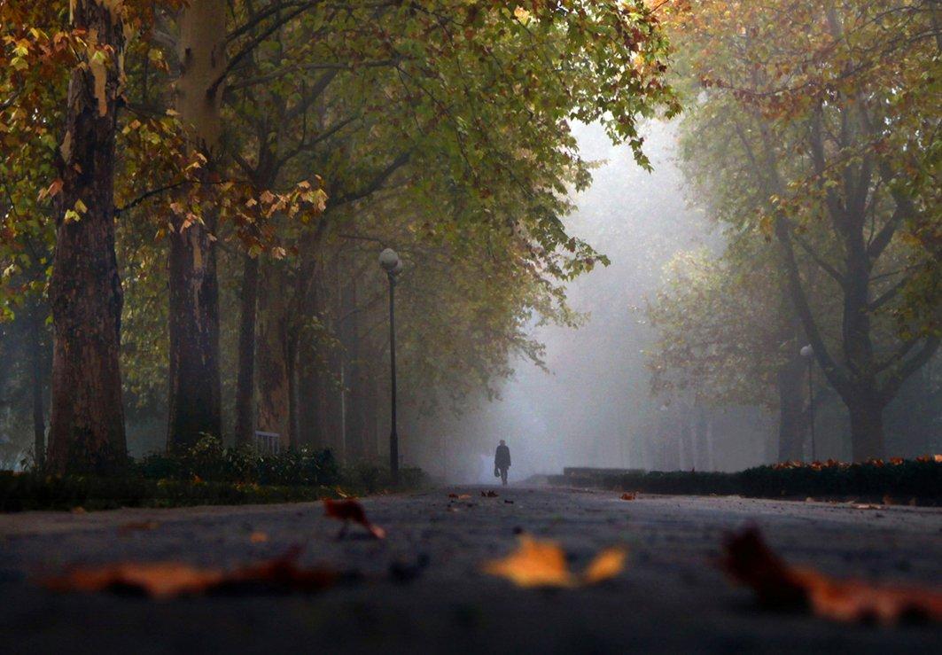 осень, туман, аллея, сквер, Ritta