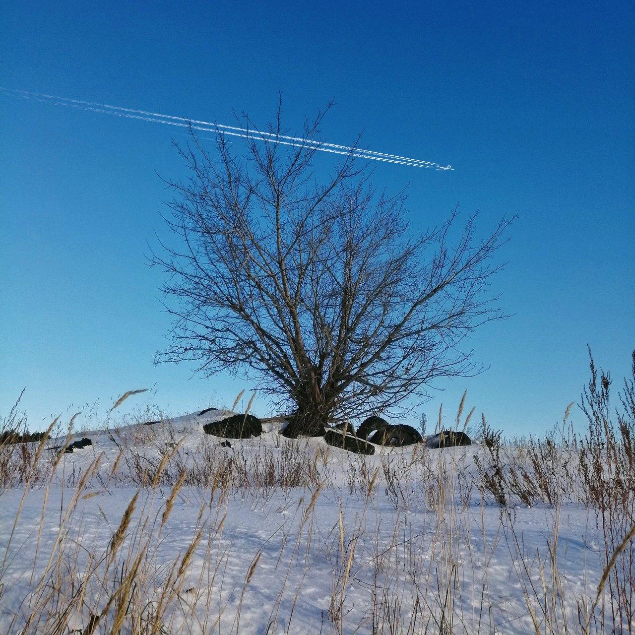 деревья, Подойницин Геннадий