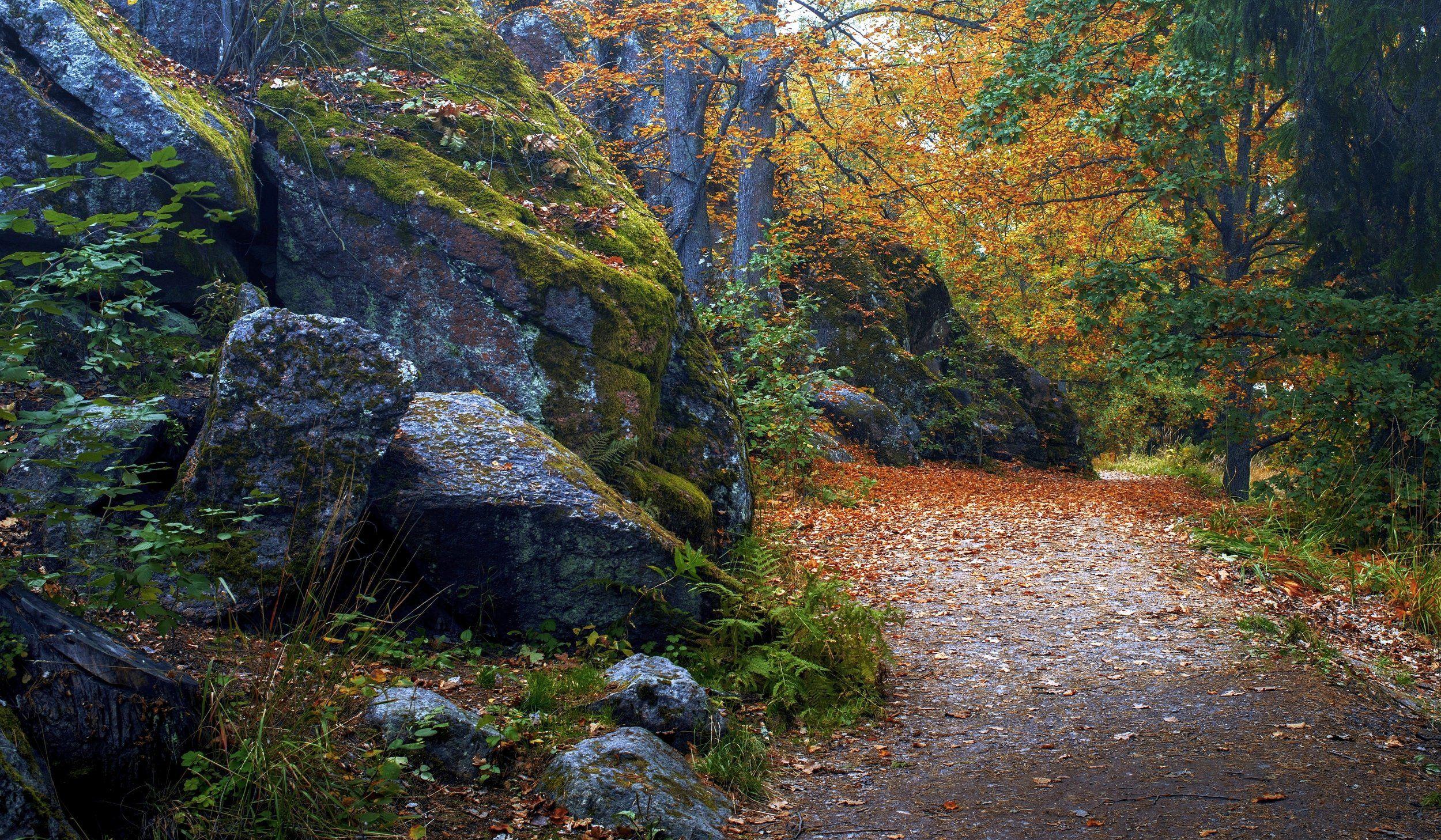пейзаж,осень,природа,парк,камни,валуны,листья, Тамара