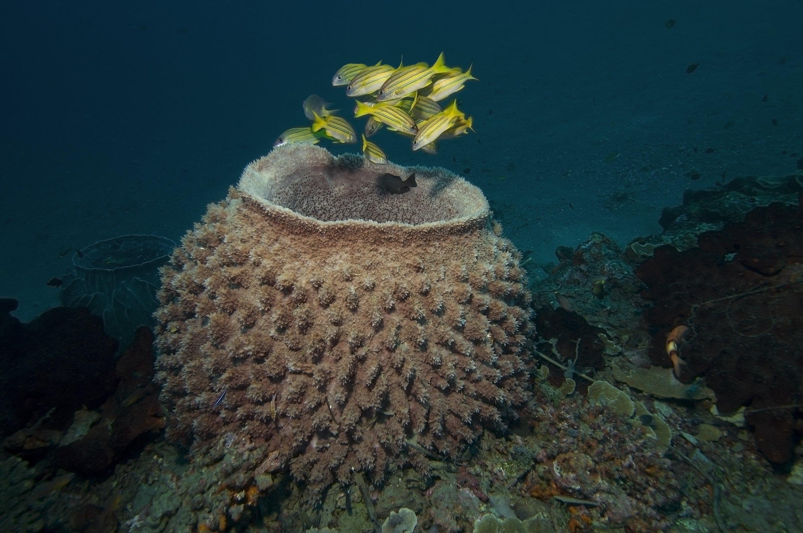 дайвинг, дайвер, рыбы, рыба, стая, океан, индонезия, подводный, синий, Дмитрий