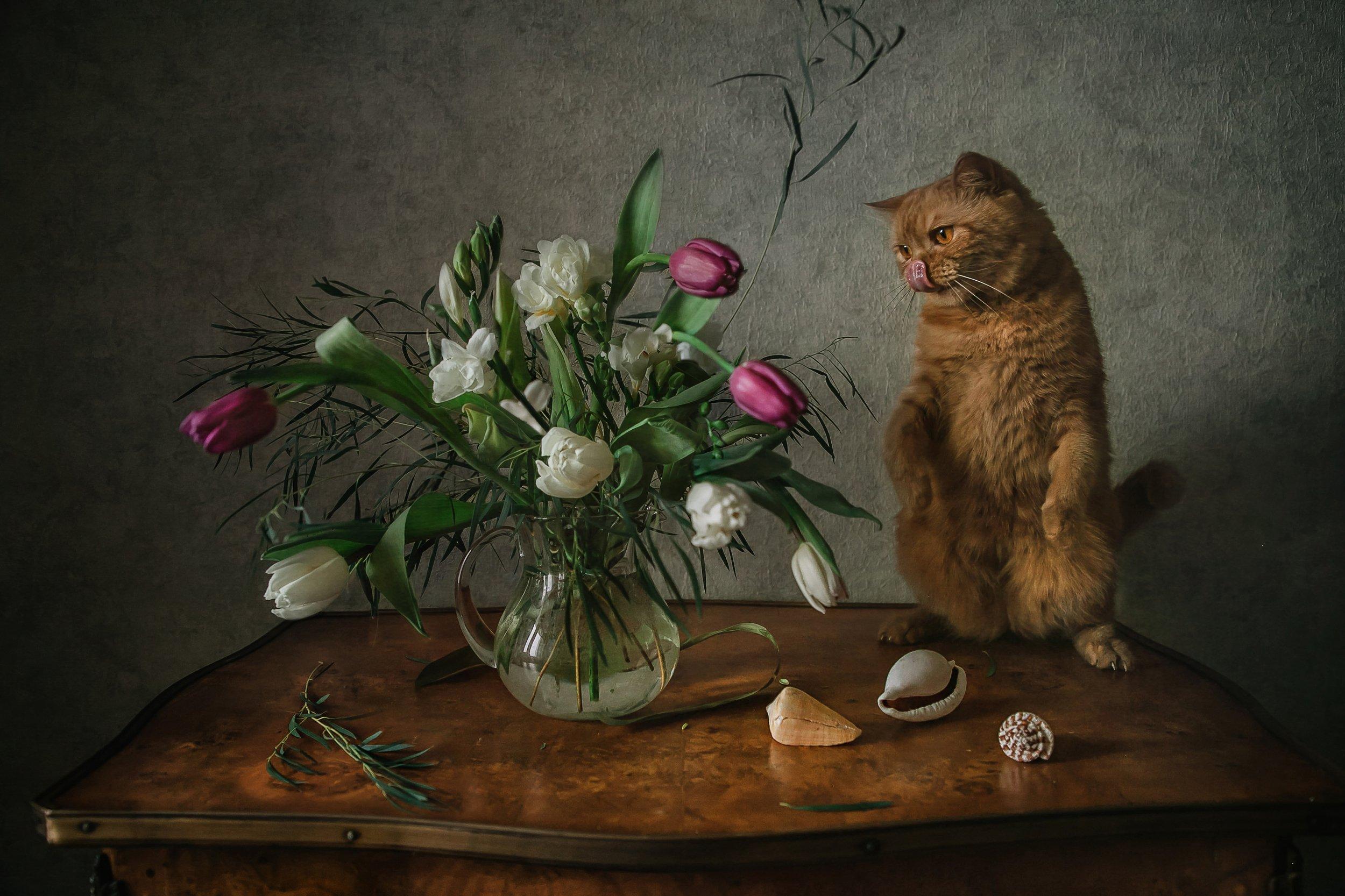 натюрморт, кот, цветы, ракушки, Анна Петина