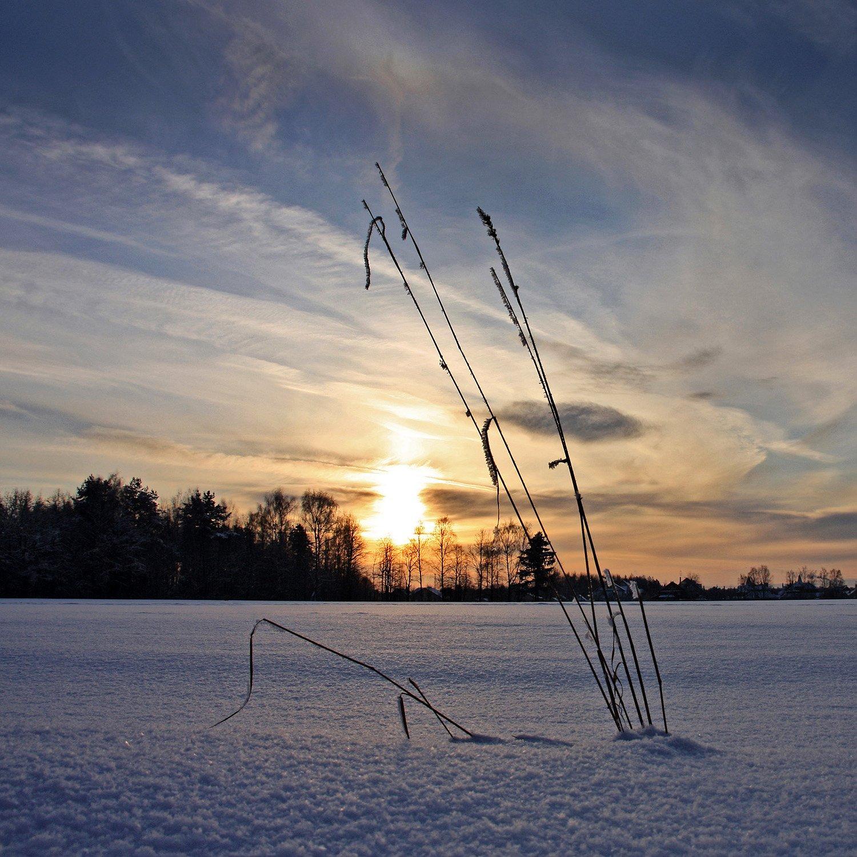 вечер, закат, зима, снег, Тарасов Алексей