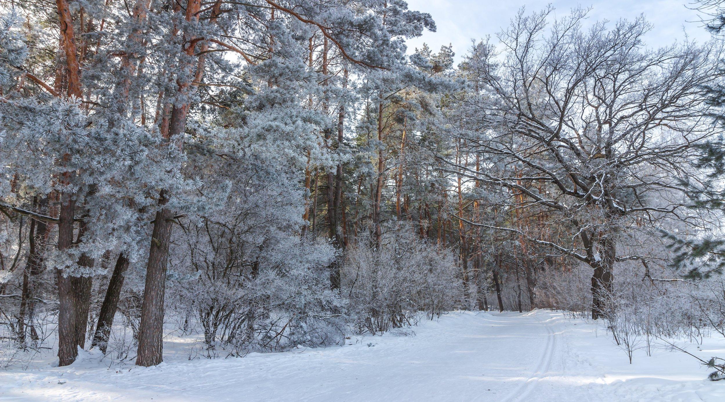 снег, природа, мороз, лыжня, лес, иней, зима, заповедник, Востриков Руслан