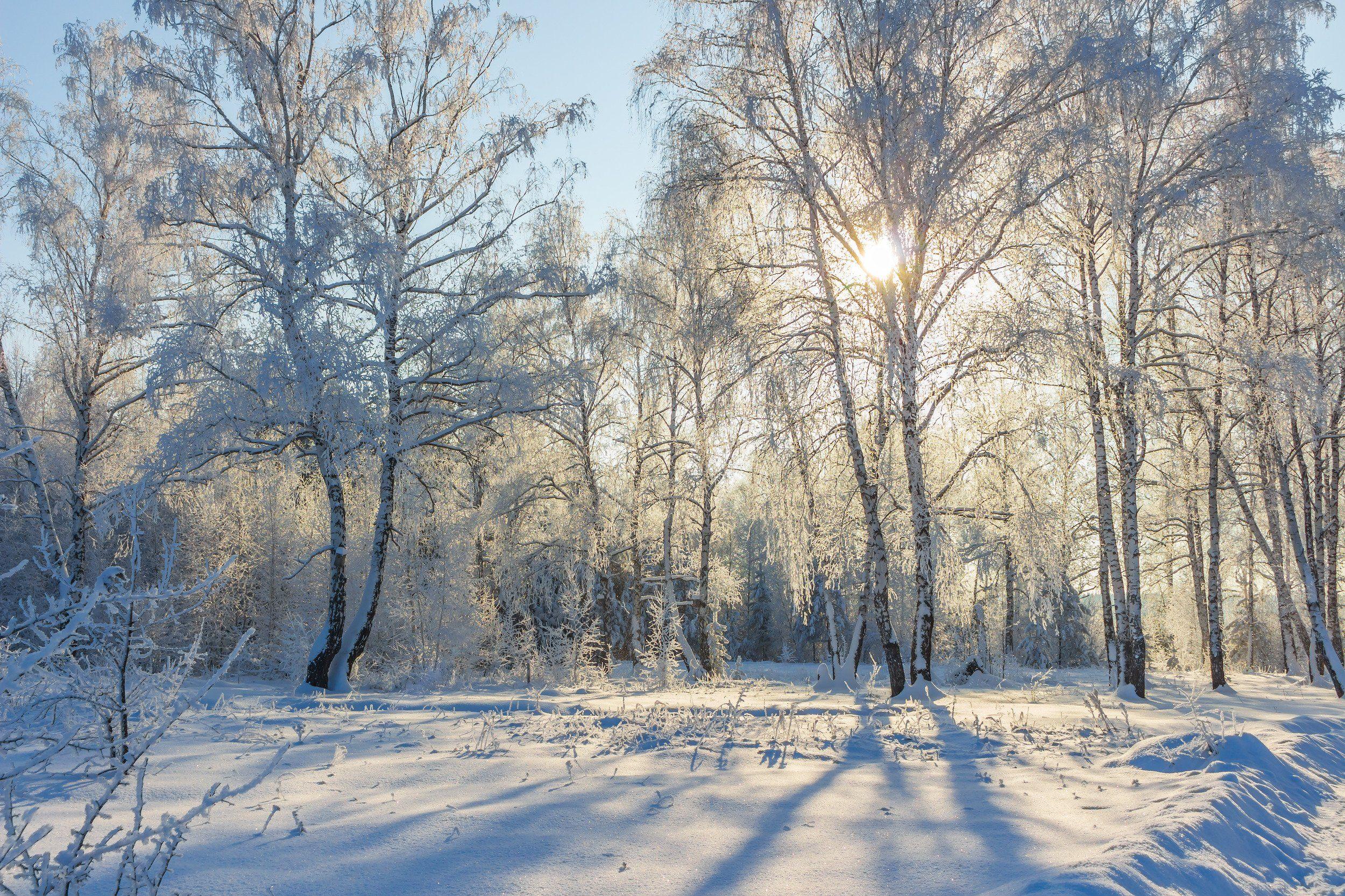 снег, природа, мороз, лес, иней, зима, Востриков Руслан