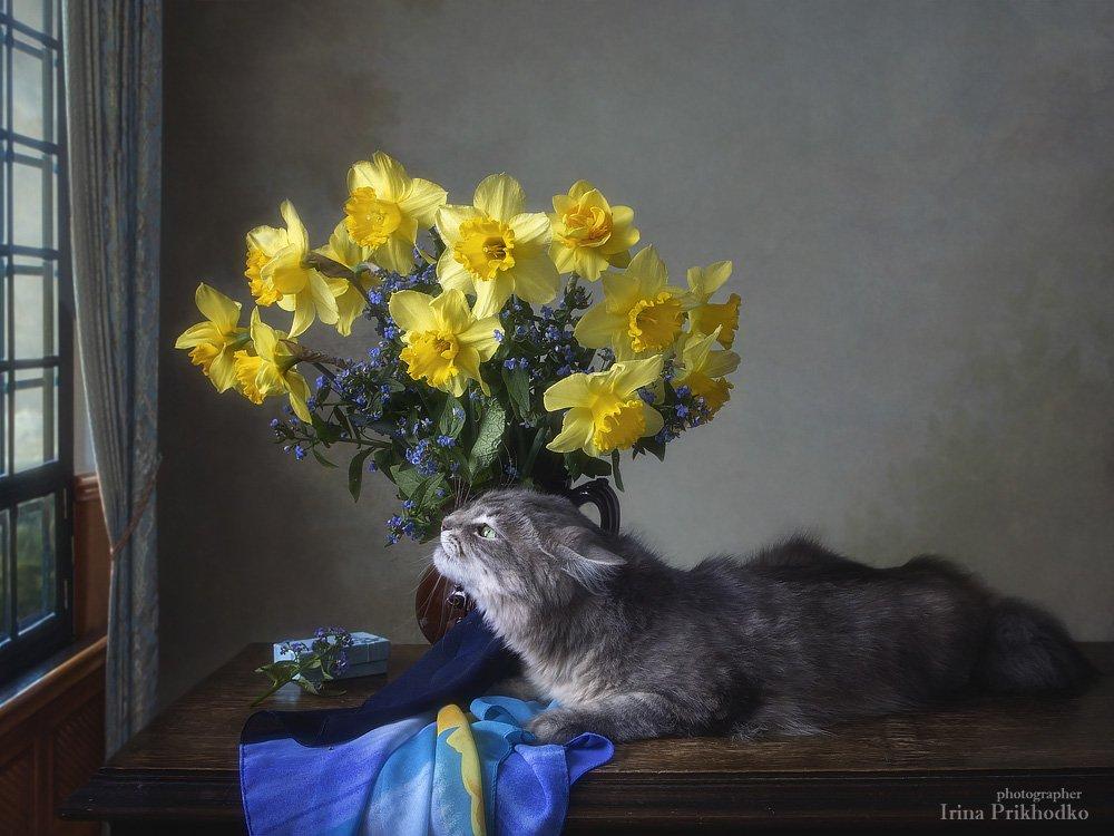 натюрморт, котонатюрморт, постановочная фотография, домашние животные, кошка Масяня, весна, букет, нарциссы, Приходько Ирина