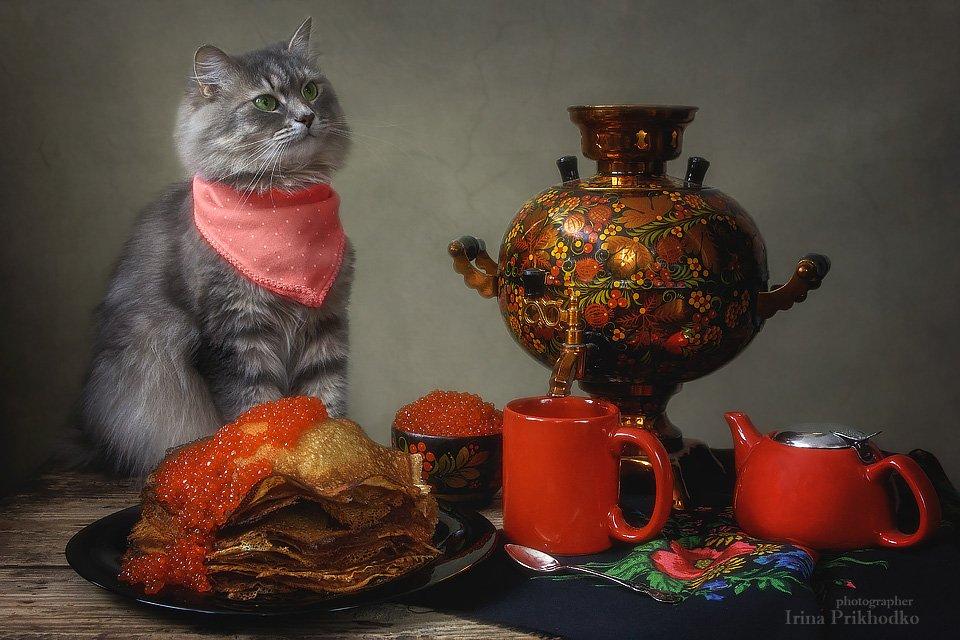 натюрморт, масленица. блины, икра, кошка Масяня, самовар, постановочное фото, котонатюрморт, Приходько Ирина