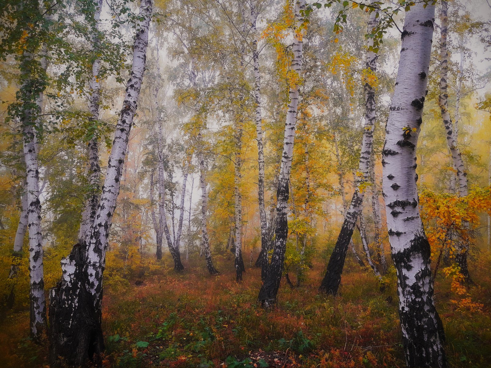 пейзаж,туман,сентябрь,лес, Инаида