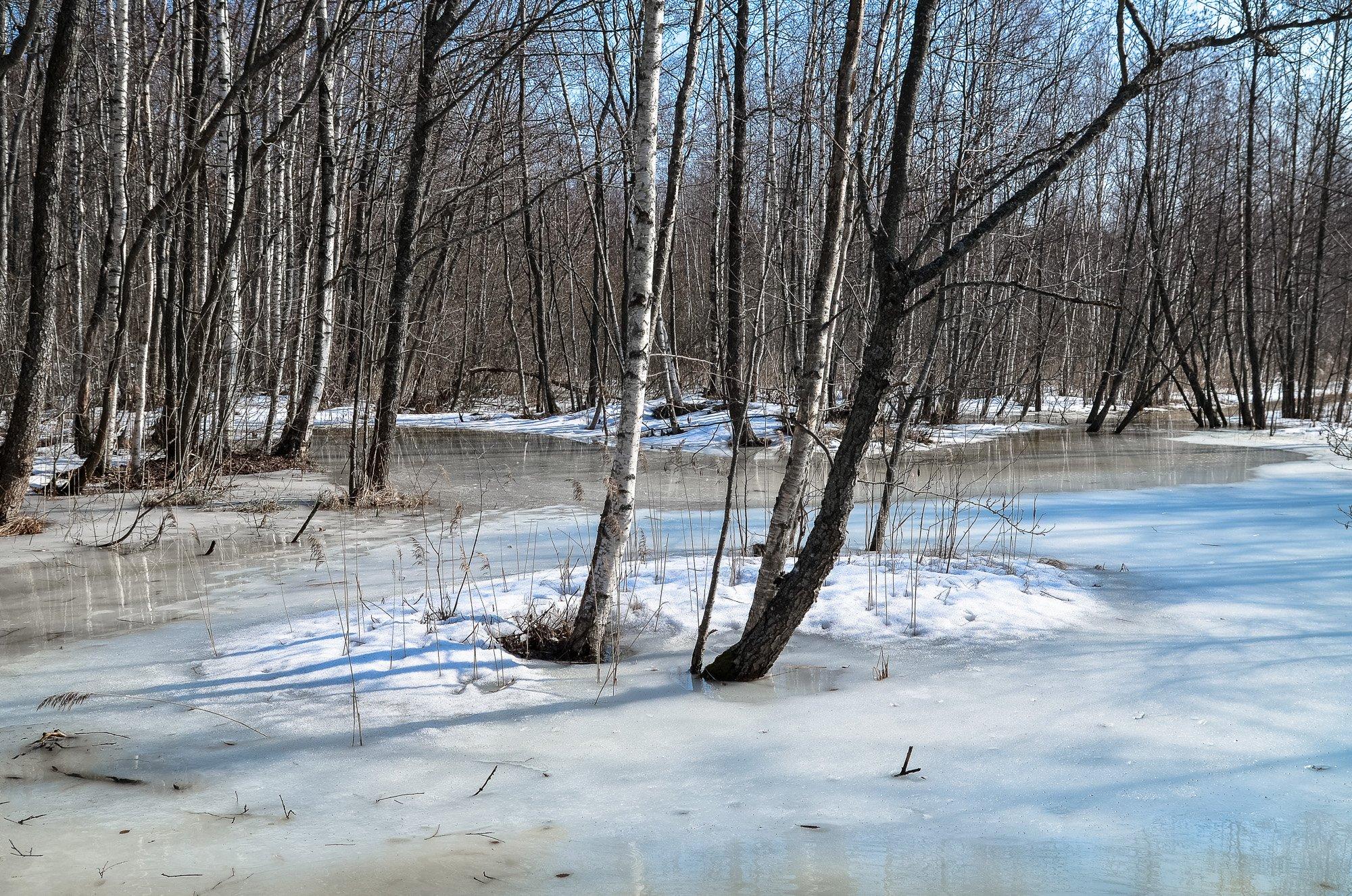 весна, болото, ленобласть, заповедник, заказник, красиво, снег, апрель, река, Верещако Валерий