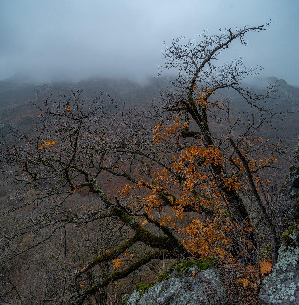 гора, рассвет, небо, плато, облака, утро, тучи, непогода, домбай ,дерево, туман, дымка, Алабердов Арсен