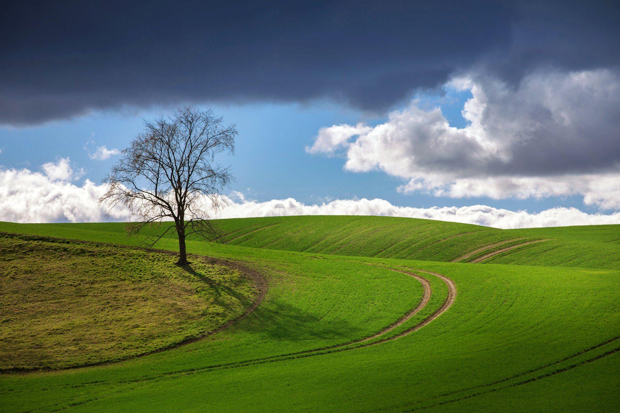 весенний пейзаж spring landscape green poland tree blue sky canon сельское хозяйство nature clouds, Radoslaw Dranikowski