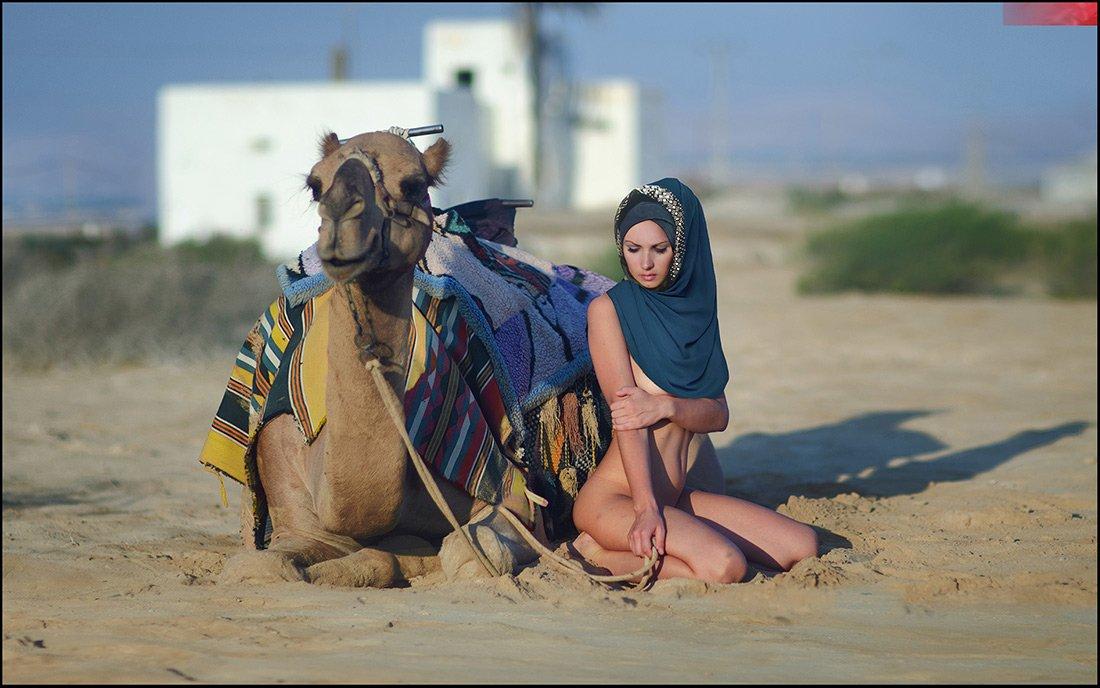camel, desert,, Andrew Lucas