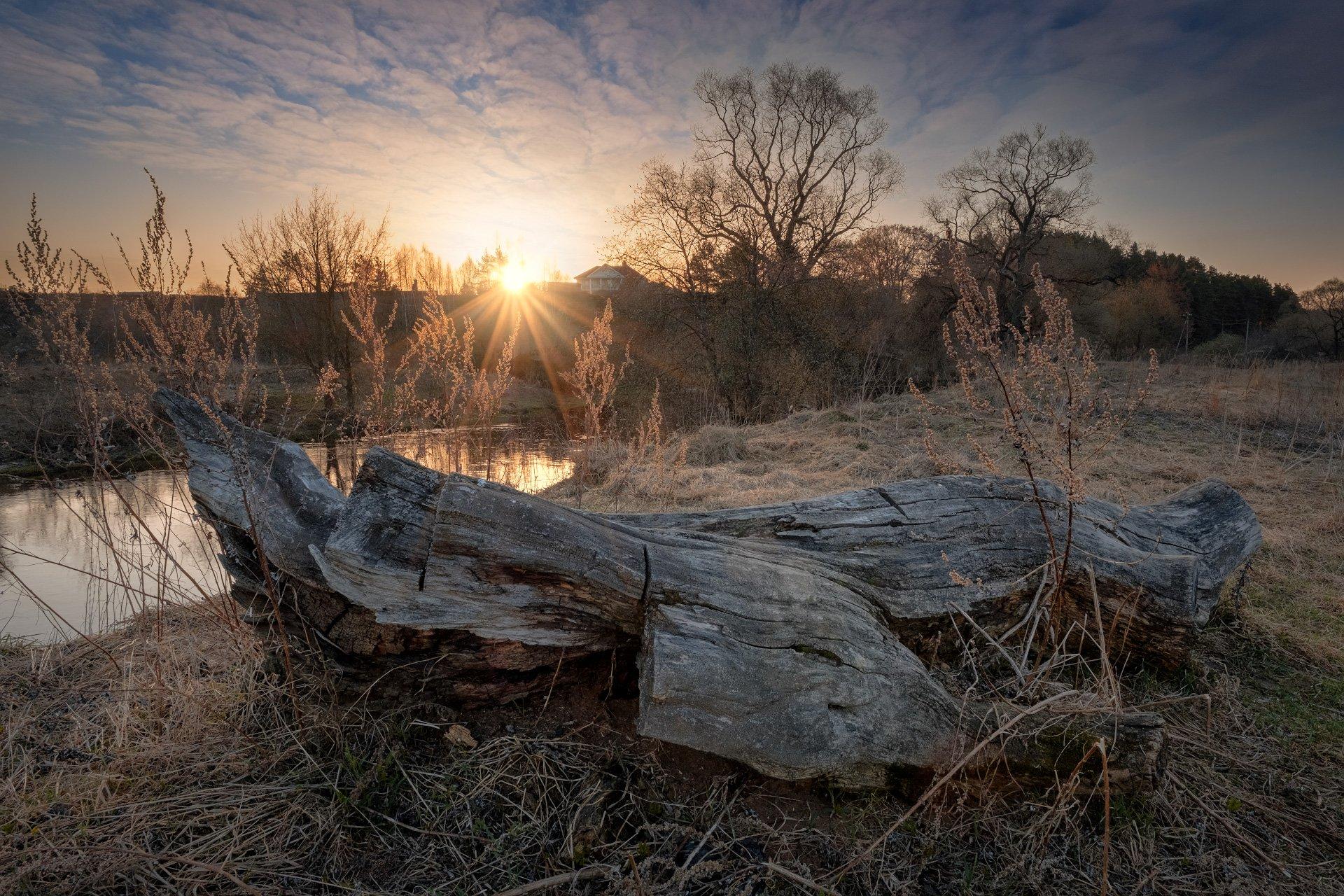 река, истра, утро, коряга, деревья, рассвет, вода,, Андрей Чиж