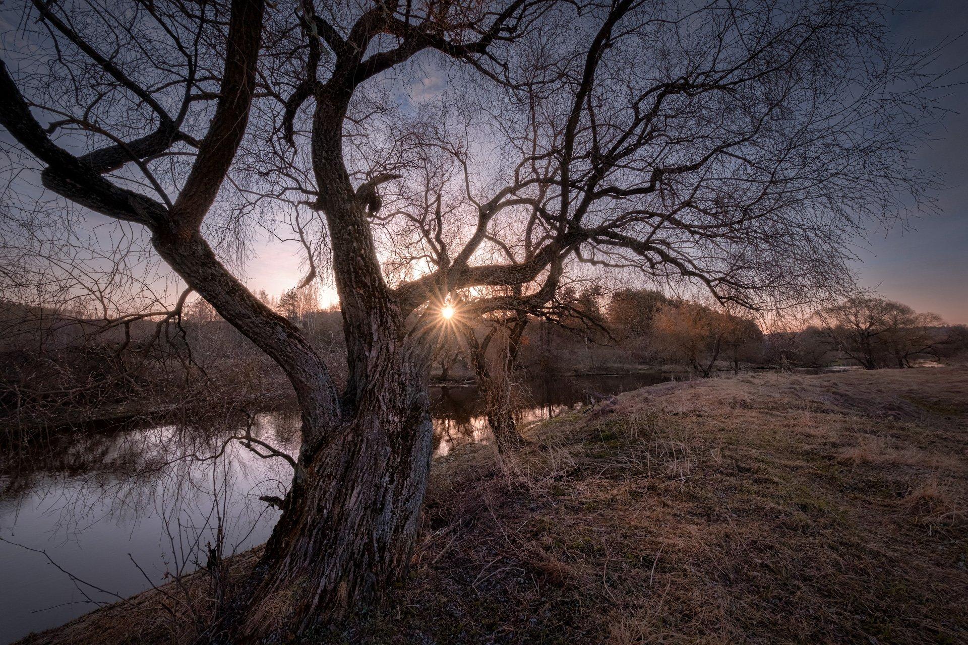 река, истра, утро, дерево, рассвет, вода, пейзаж, Андрей Чиж