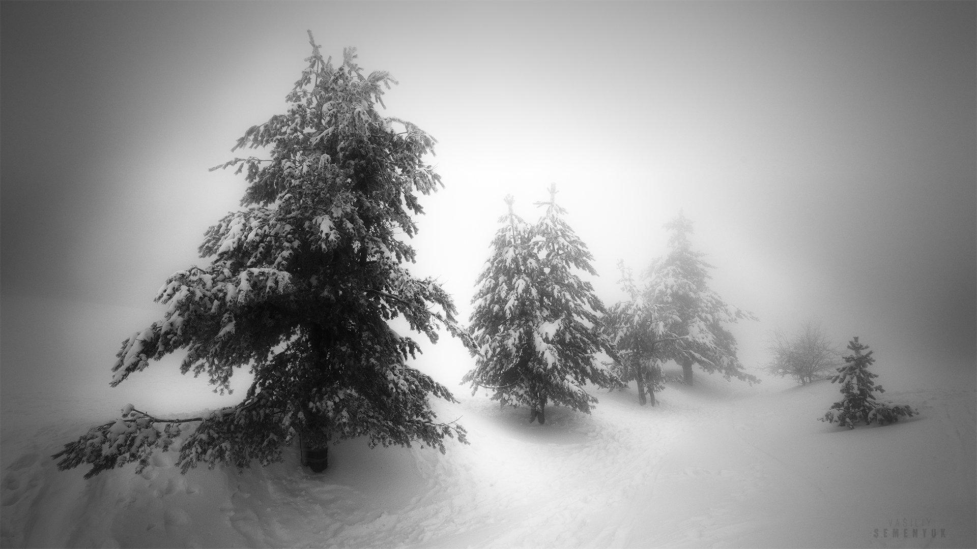 крым, ай-петри, сосны, снег, метель, мороз, деревья, минимализм, ч/б, landscape, blizzard, trees, minimalism, b/w., Семенюк Василий