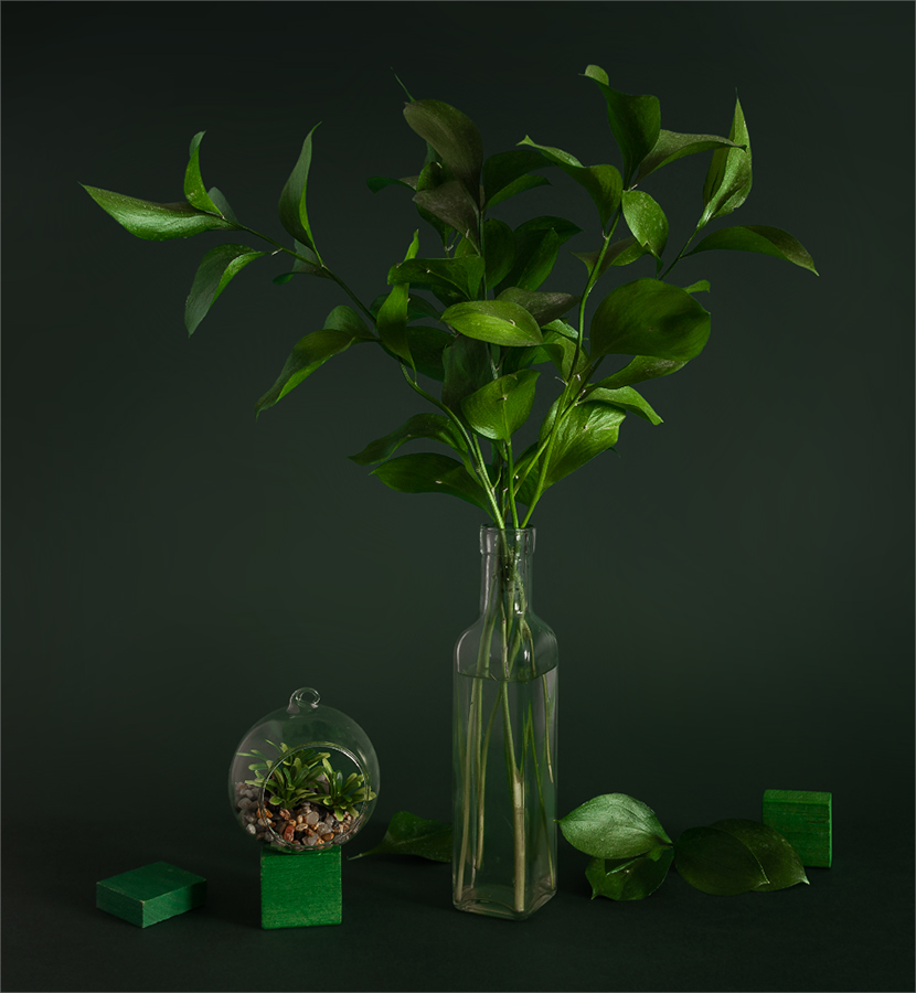 still life, натюрморт,    винтаж,   растение, зеленый,, Шерман Михаил