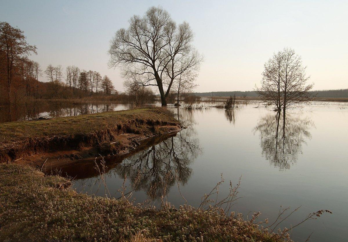 Весна, Воронежская область, Разлив, Река Усманка, Elena  Bezryadina
