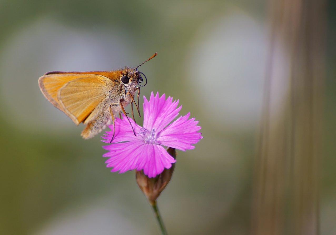 Бабочка, цветок, Чепленко Алексей