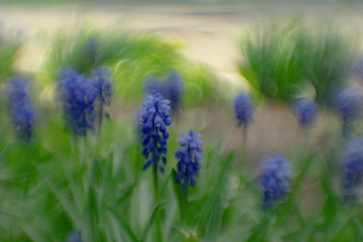 макро, цветы, весна, боке, Рябов Игорь