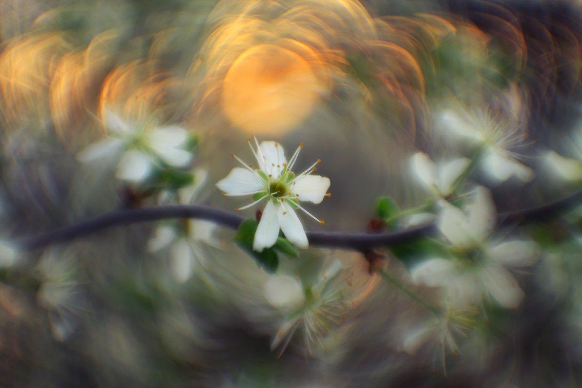 макро, весна, цветение, Рябов Игорь
