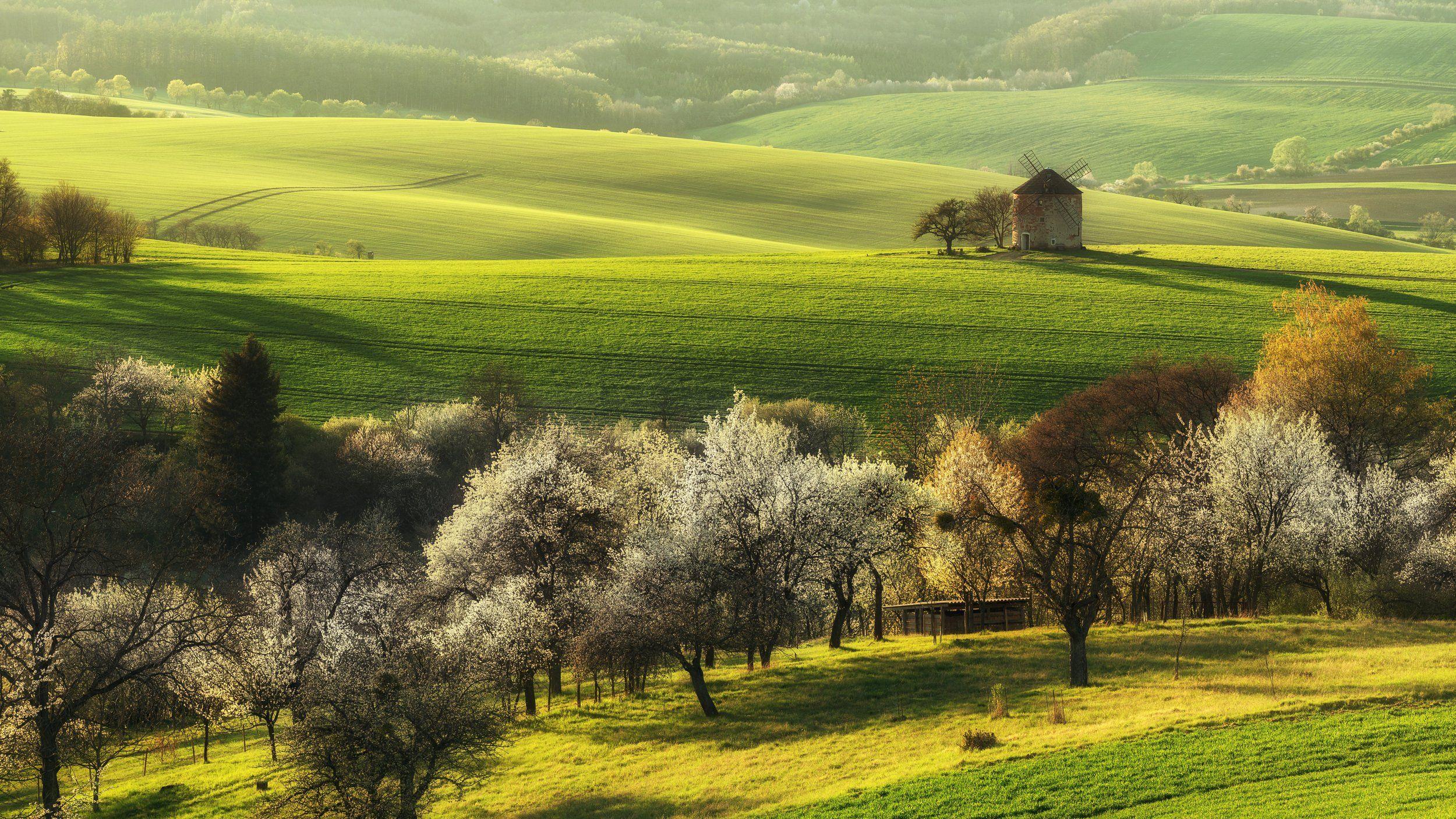 spring,tree,landscapes, Samochin Milan