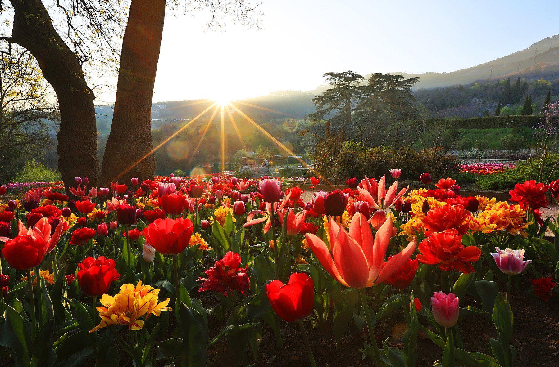 никитский сад, ялта, крым, никитский ботанический сад, ай-петри, выставка тюльпанов, тюльпаны, весна в ялте, Titov Serge