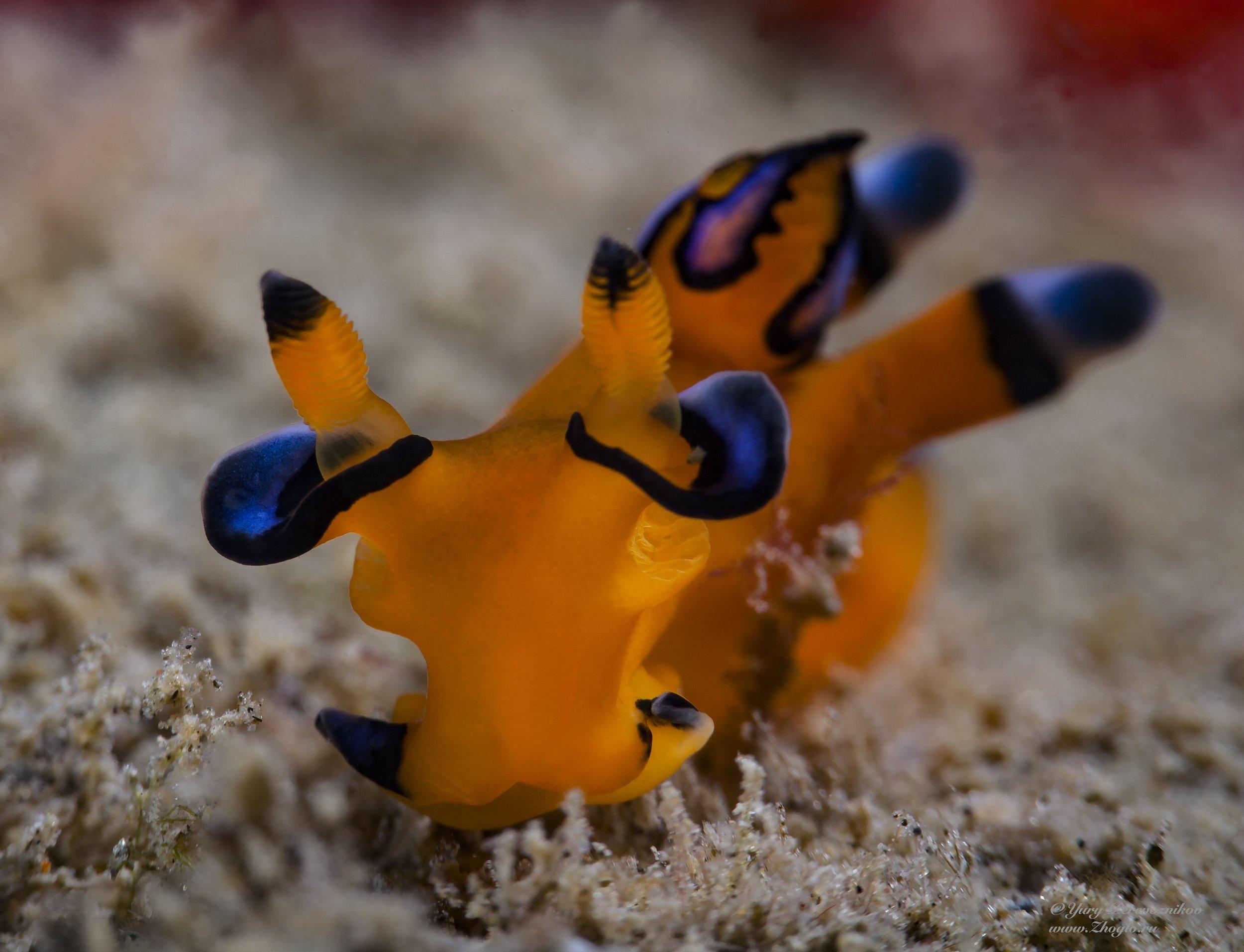 подводное фото подводный мир хургада египет жогло zhoglo красное море, Перевозников Юрий