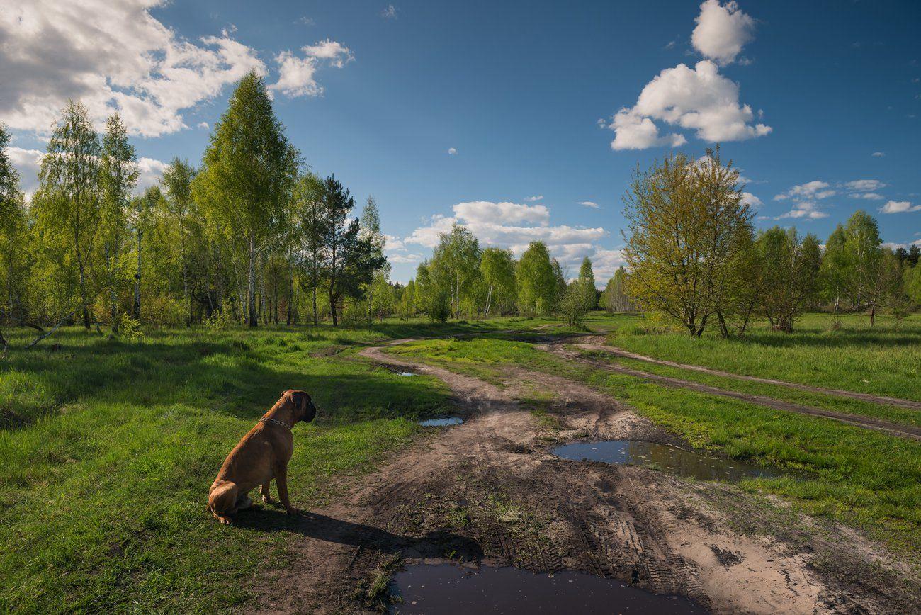 весна, май, вечер, луг, собака, Галанзовская Оксана