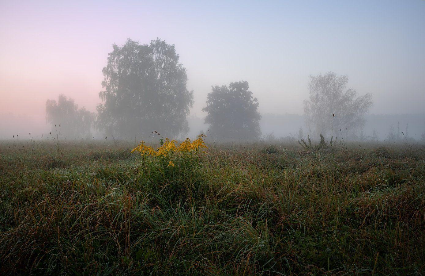 рассвет, туман, поле, деревья,, Сергей Шабуневич