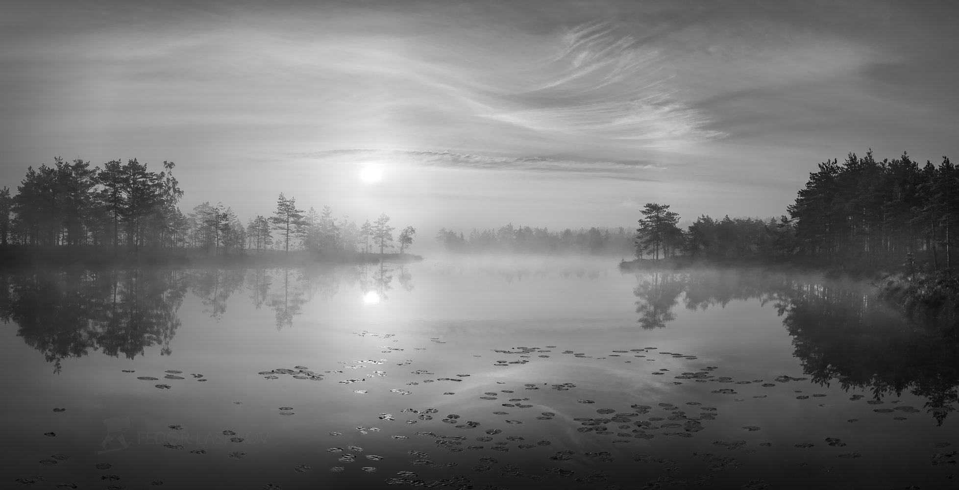 ленинградская область, рассвет, лето, сосны, озеро, отражение, деревья, берег, небо, облака, болото, водная гладь,, Лашков Фёдор