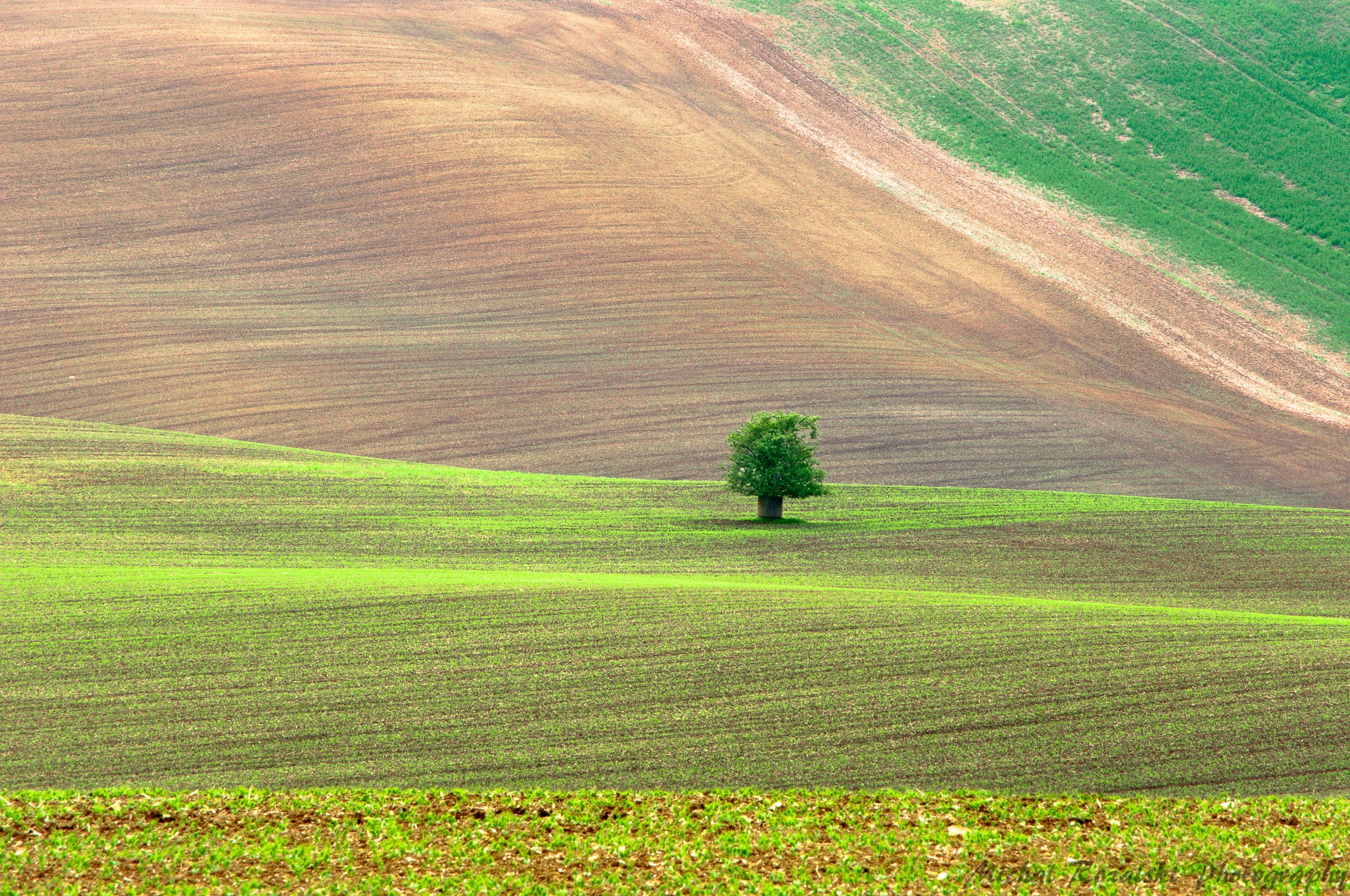 moravia, ,hills, ,spring, ,season, ,colors, ,tree, ,light, ,sunrise, ,fields, ,landscape, ,photography, Michal Rozalski