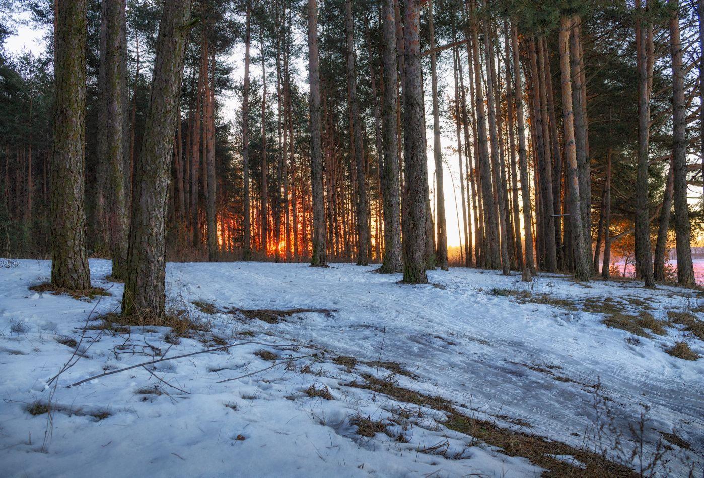 рассвет, лес, зима,, Сергей Шабуневич
