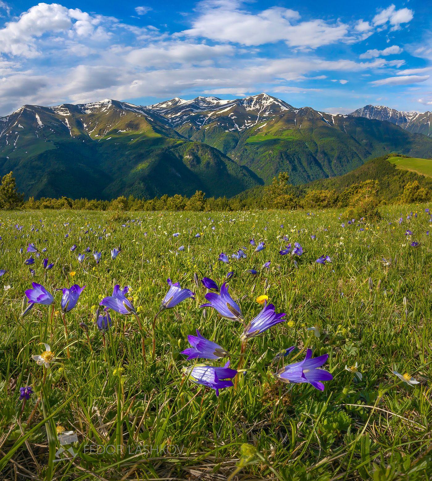 горы, гора, архыз, альпийские, луг, колокольчик, цветы, цветущие луга, цветок, весна, в горах, облака, северный кавказ, вершины, облака,, Лашков Фёдор