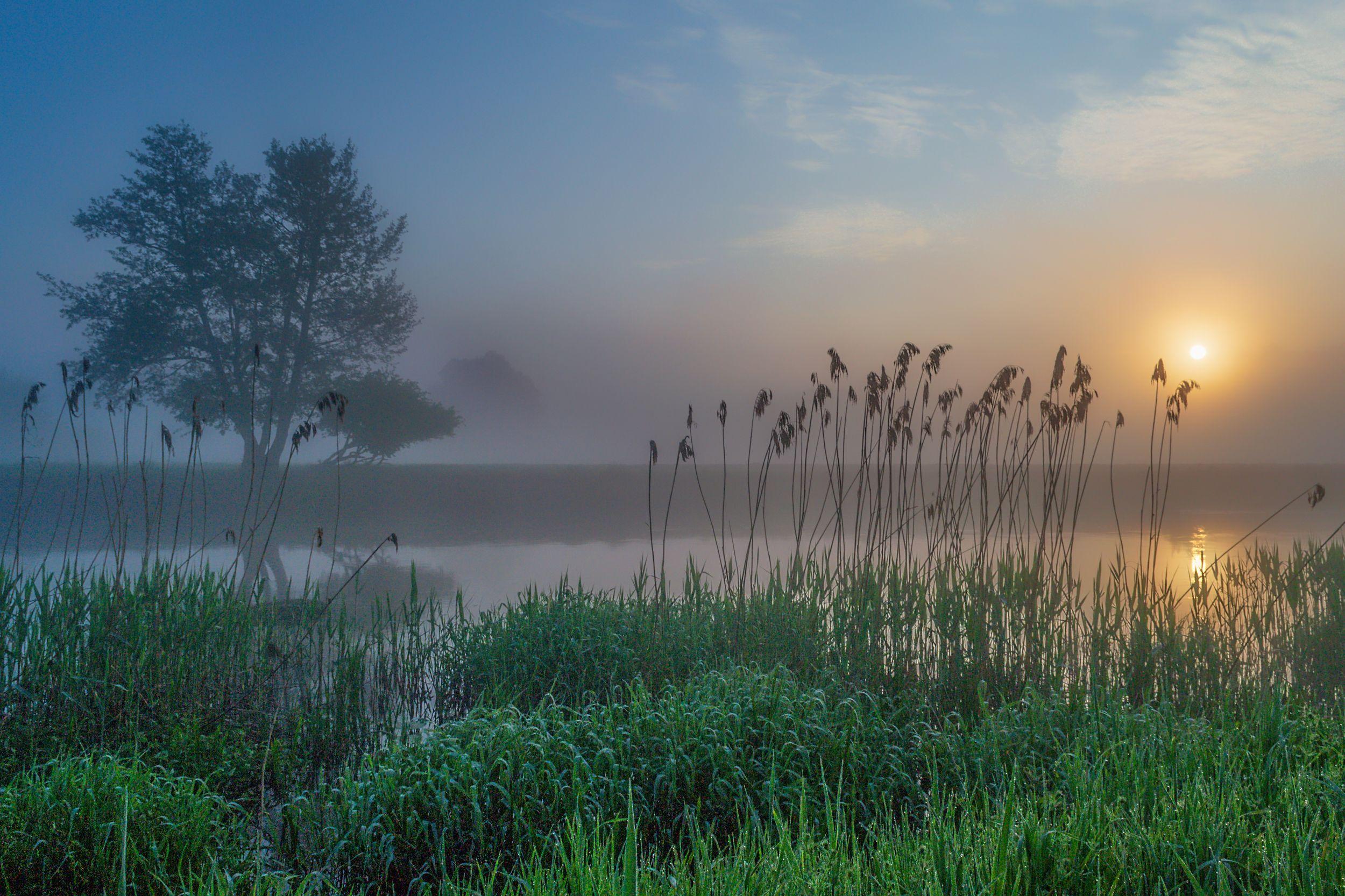 fog water tree light nature sky silence sun landscape atmosphere dawn river gwda nikon reflection, Tollas Krzysztof