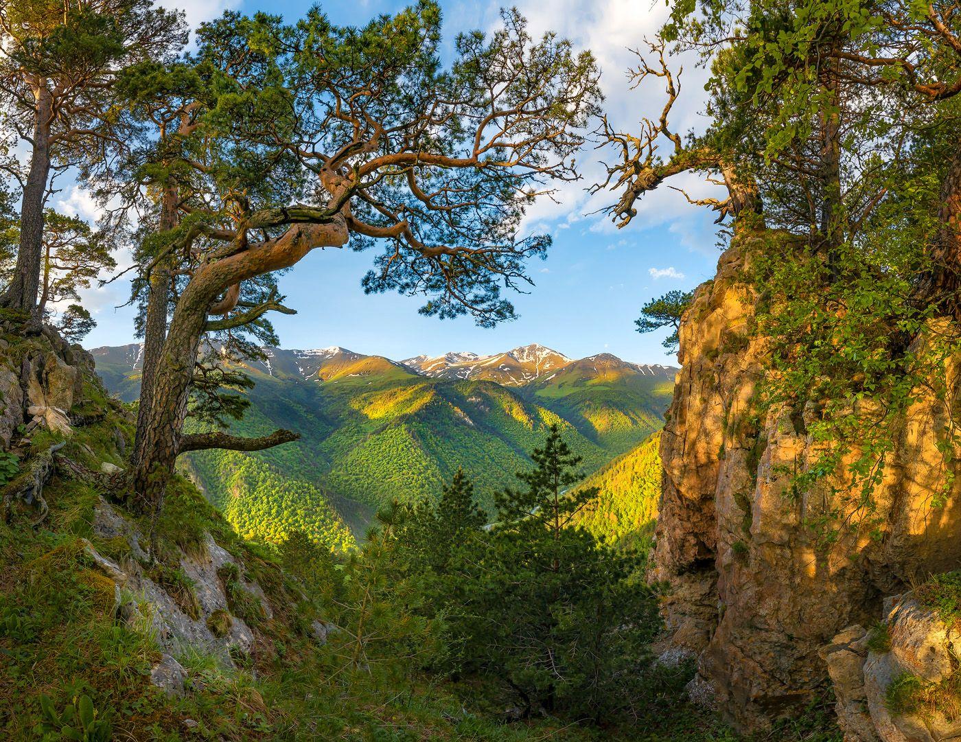 северный кавказ, горы, гора, архыз, хребет, горное, сосна, сосны, лес, деревья, лесное, дерево, ствол, путешествие, скалы,, Лашков Фёдор