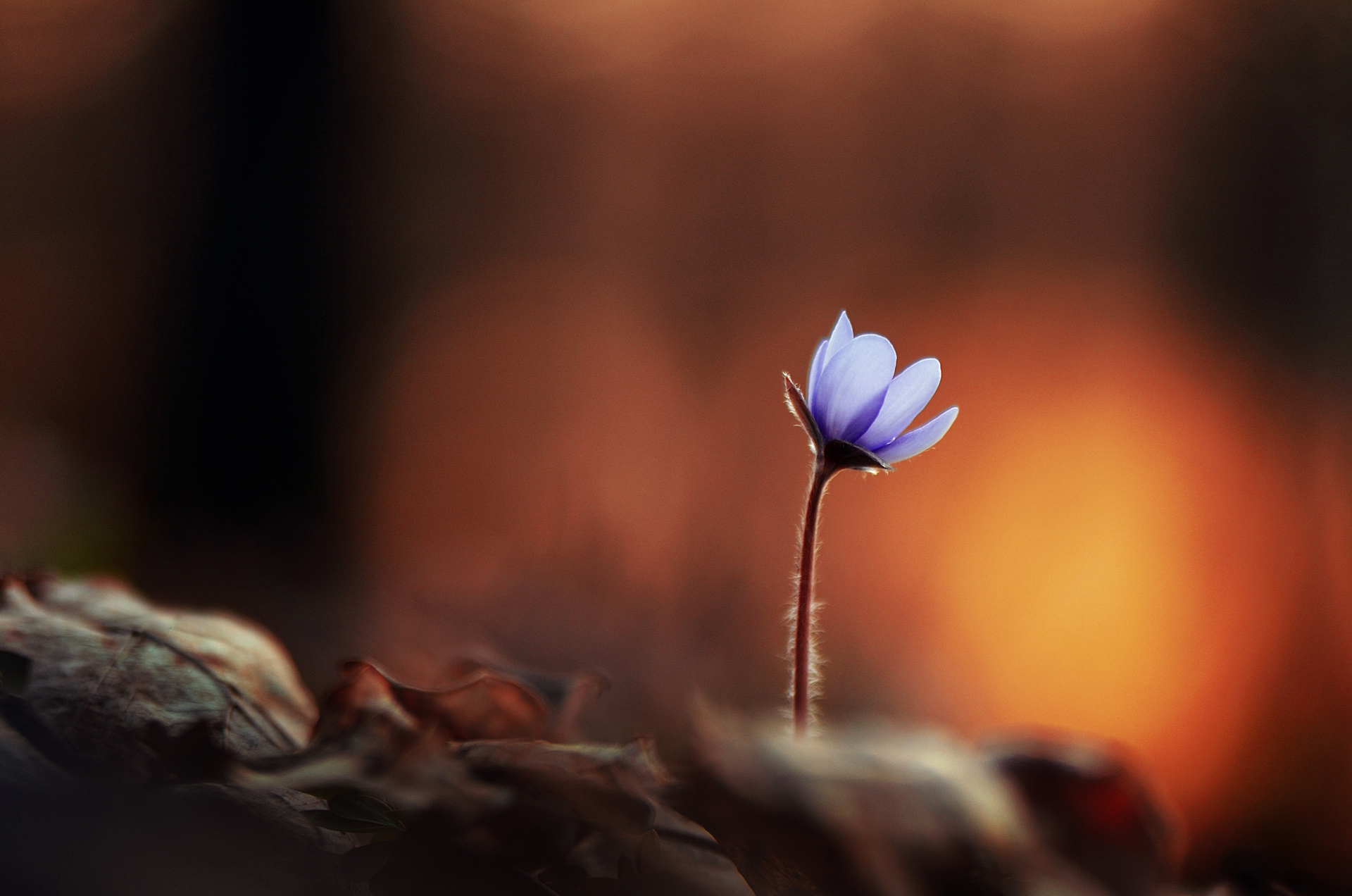 macro, flowers, nature, macrophoto, silence, весна, цветы, макро, природа, тишина, вчувствование, Быканова Виктория